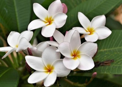 Poolside flowers