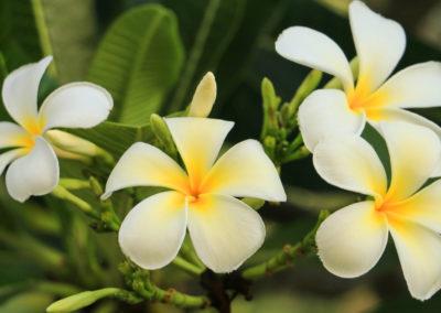 Lalawadee floral inspiration   Bawa Pools